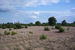 Colonisation spontanée d'un champ après arrêt de la culture (en Pologne). Ici, des graminées, puis des arbres apparaissent spontanément, en commençant par des espèces et essences pionnières. Il peut toutefois falloir des siècles ou millénaires pour effacer totalement les traces de l'Agriculture intensive