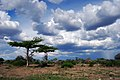 Selous Game Reserve-7.jpg