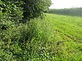 Semi lost footpath to Selling - geograph.org.uk - 1383138.jpg