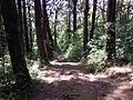 Sendero en Bosque de la Hoja.JPG