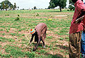 Senegal reforestation.jpg