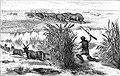 Seven Years in South Africa, page 156, herd of gnus.jpg