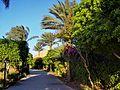 Sharm el Sheikh - panoramio (30).jpg