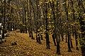 Sheki Forest.jpg