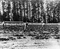 Sherman Indian High School agricultural students.jpg
