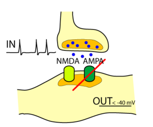 Silent synapse - Silent synapse having NMDA but no AMPA receptors.