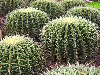 Cactus - Image: Singapore Botanic Gardens Cactus Garden 2