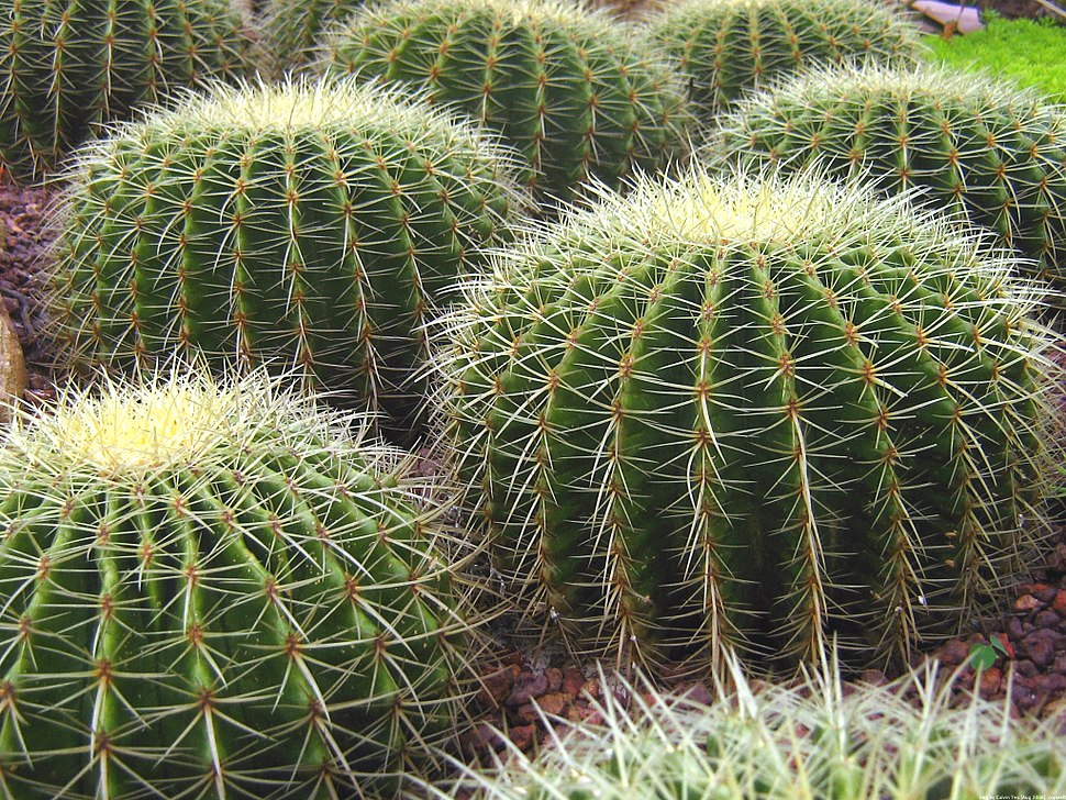 Singapore Botanic Gardens Cactus Garden 2