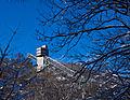 Ski Jump behind trees.jpg