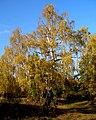 Slovakia autumn 21.JPG