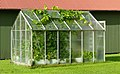 Small greenhouse with grapevines escaping 2.jpg