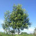 Smalltree.jpg