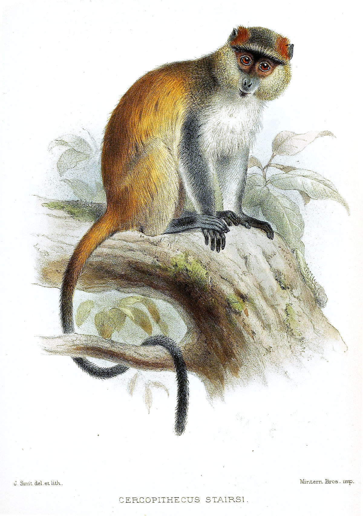 fr.m.wikipedia.org