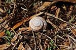 Snail (24660520281).jpg