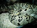 Snakes 11 (2).jpg