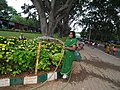 Snap from Lalbagh Flower Show Aug 2013 7833.JPG