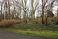 Snowdrops - geograph.org.uk - 1707969.jpg