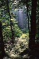 Sous-bois dans le Parc de la Poudrerie de Sevran.jpg