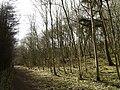 Southwold Plantation in Elloughton Dale - geograph.org.uk - 713847.jpg