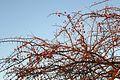 Spitzkoppe-Végétation (2).jpg