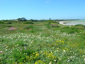 Namaqualand - The spring flowers in Namaqualand.