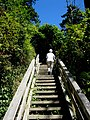 Stairs from beach to park - panoramio.jpg
