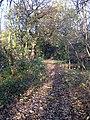 Stanley Marsh Nature Reserve - geograph.org.uk - 1052624.jpg
