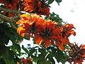 Suedafrika Pflanze02.JPG