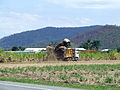 Sugarcane harvester at work in Queensland.jpg