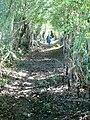 Sunken track - geograph.org.uk - 557272.jpg