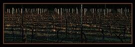 Sunset Pokolbin Vineyard
