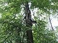 Suomalais-ugrilainen uhrilehto vuonna 2002. Jumalalle pyhitetty puu uhrilahjoineen Marin tasavallassa.jpg