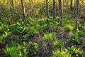 Swamp Walk (2) (8709354532).jpg
