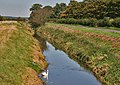 Swan in Ditch - geograph.org.uk - 237866.jpg