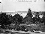 Sydney Harbour from Botanic Gardens (2362650251).jpg