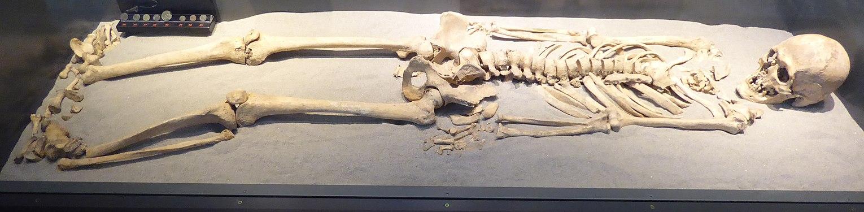 Szombathely-iseum-csontvaz-0.jpg