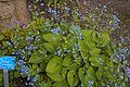 TU Delft Botanical Gardens 41.jpg