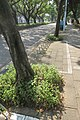 TW 台灣 Taiwan TPE 台北市 Taipei City 中正區 Zhongzheng District 中山南路 Zhongshan South Road August 2019 IX2 02.jpg