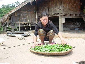 Ta Oi people - Ta Oi women spreading leaves also known as pak gat, Salavan Province, Laos
