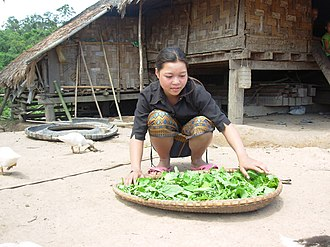 Ta Oi people - Ta Oi women spreading leaves also known as pak gat, Salavan Province, Laos