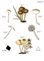 Tab45-Agaricus melleus Schaeff.png
