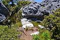 Table Mountain Cape Town 044.jpg