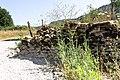 Taggsallat. Lactuca serriola-3070 - Flickr - Ragnhild & Neil Crawford.jpg