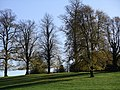Tall trees, Wollaton Park - geograph.org.uk - 280857.jpg