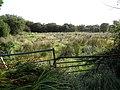 Tawley Townland - geograph.org.uk - 1482223.jpg