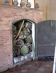 """A distillery oven loaded with agavepiñasor """"pineapples"""", the first step in the production of tequila post harvest."""