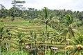 Terraced rice fields (16437852213).jpg