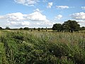Teversham Fen - geograph.org.uk - 1481698.jpg