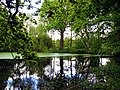 The Pond in the Woodland - geograph.org.uk - 11679.jpg