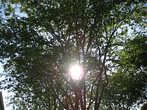 The Trees and Sun.JPG